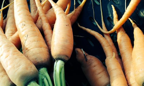 carrots, produce, vegetables, CSA, Community Supported Agriculture, shares